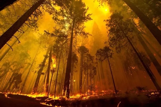 森林防火监控